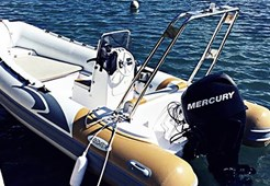 Predator 490 for charter in Zadar